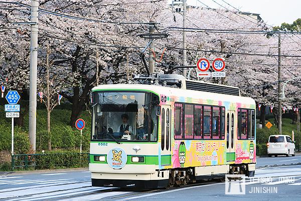 搭著路面電車去賞櫻!東京都電車興衰史